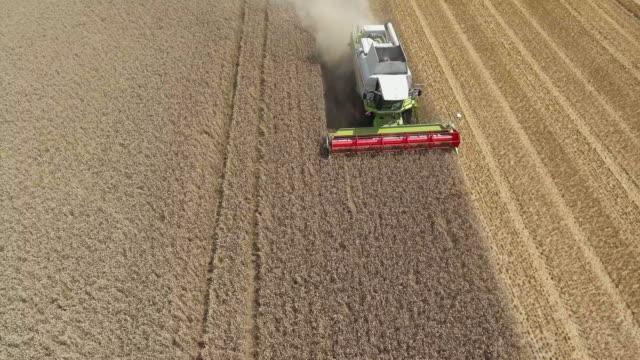 vídeos de stock, filmes e b-roll de colheitadeira de colheita viaduto de campo de trigo - ponto de vista de câmera
