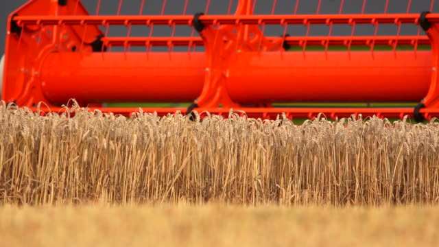 combine harvester harvesting wheat field - combine harvester stock videos & royalty-free footage