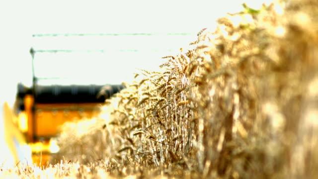 vídeos de stock e filmes b-roll de ceifeira debulhadora colheita de trigo campo (/ 4 k uhd para hd) - super exposto