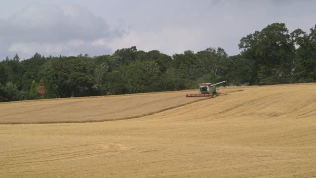 "vidéos et rushes de combine harvester harvests crop in field, uk - ""bbc natural history"""