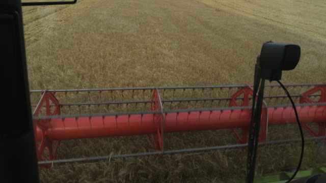pov combine harvester harvests crop in field, uk - cereal plant stock videos & royalty-free footage