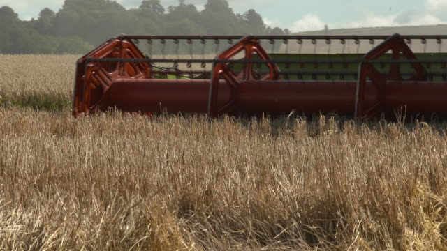 stockvideo's en b-roll-footage met combine harvester harvests wheat crop in field, uk - cereal plant