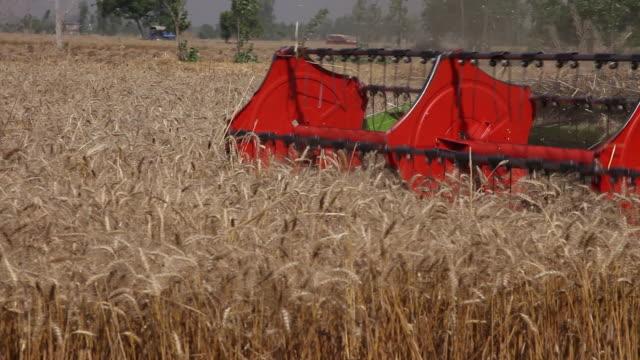 combine harvester in a wheat crops  - punjab region stock-videos und b-roll-filmmaterial