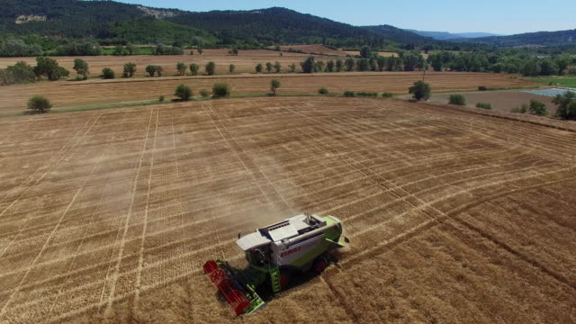 combine harvester in action in valensole in the department of provence alpes cotes d'azur no - luberon video stock e b–roll