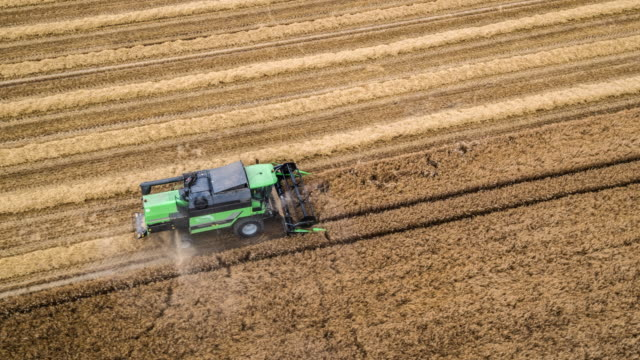 aerial: combine harvester in barley field - barley stock videos and b-roll footage