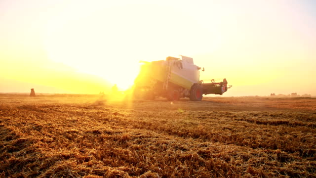 SLO MO Combine harvester in the field at dawn