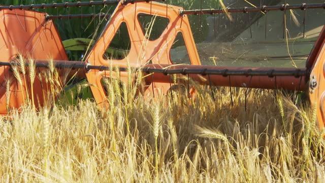 hd :チェックアウトのフィールド - 穀物 ライムギ点の映像素材/bロール