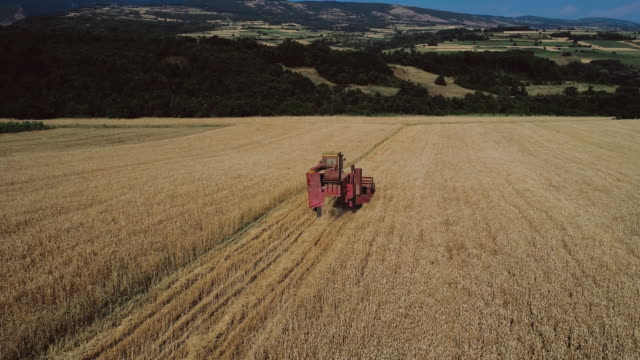 Combine Harvester in Wheat Field during Harvest
