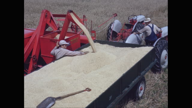 WS Combine harvester loading wheat grains in tractor / United States
