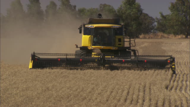 stockvideo's en b-roll-footage met a combine harvester moves through a wheat field.  - cereal plant