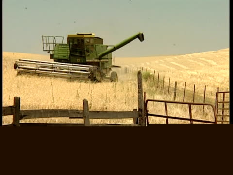 wa combine harvester moving through, uneven wheat field, to camera - uneven stock videos & royalty-free footage