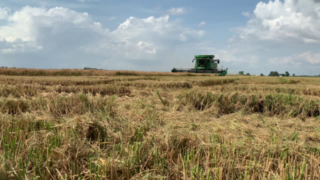 combine harvester on rice field in bolivar county, mississippi, u.s., on tuesday, september 15, 2020. - agricultural field stock videos & royalty-free footage