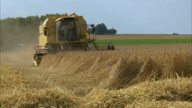 MS, Combine harvester on wheat field, Namur, Belgium
