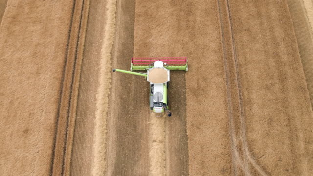 Combine Harvester Operator Checking Crop Quality