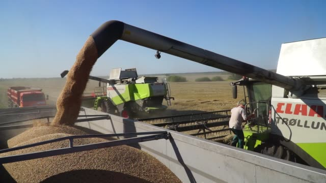 A combine harvester pumps freshly harvested wheat grain into a truck during a harvest by Agrotrade Group in Chernihiv Ukraine on Thursday Aug 10 2017
