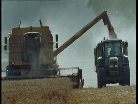 Combine harvester reaps wheat and shoots produce into trailer of tractor trundling alongside, UK