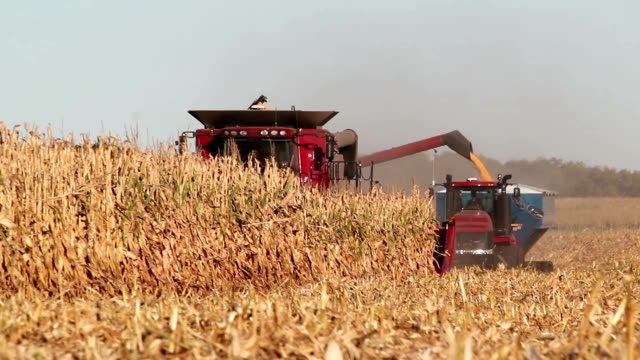 Combine Harvester Transferring Corn to Tractor Pulling Trailer