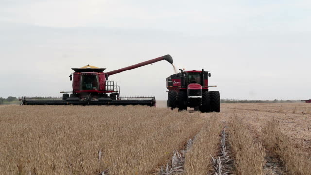 Combine Harvester Transferring Crop to Tractor Pulling Trailer