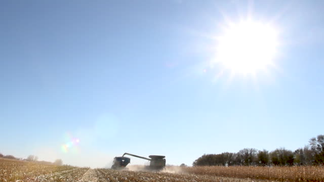 combine harvester unloading into trailer with sunshine - soybean stock videos and b-roll footage