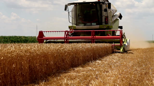 combine harvester - threshing stock videos & royalty-free footage