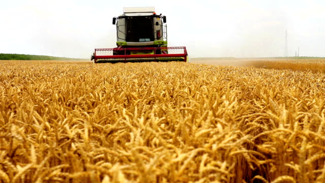 combine harvester - harvesting stock videos and b-roll footage
