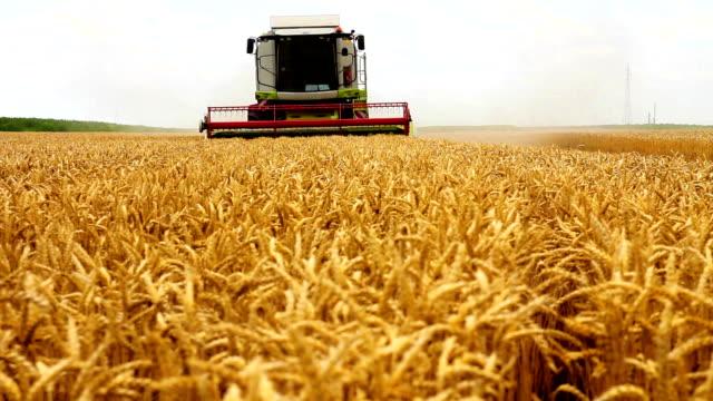 combine harvester - harvesting stock videos & royalty-free footage
