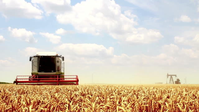 combine harvester - harvesting stock videos & royalty-free footage