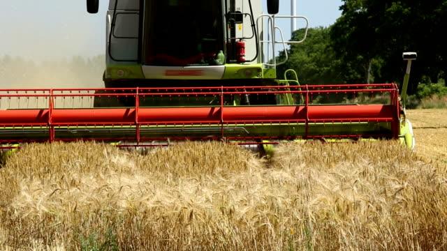 stockvideo's en b-roll-footage met combine harvester - volkorentarwe