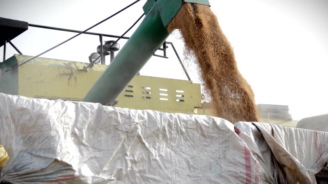 combine harvester - grain cart stock videos & royalty-free footage