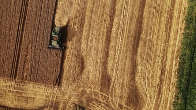 combine harvester working in the field. aerial shot - russia stock videos & royalty-free footage
