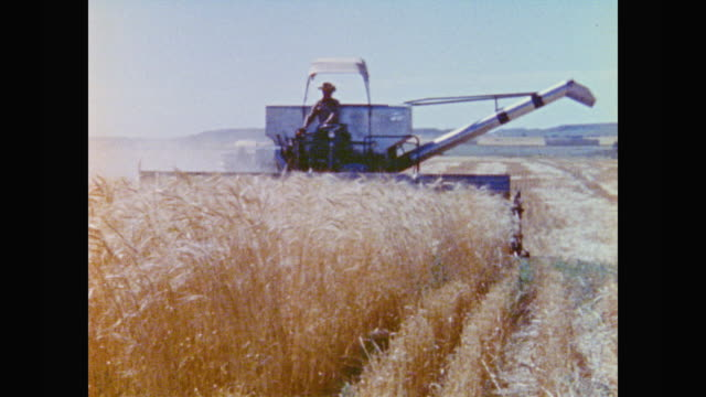 combine harvester works its way through a mature wheat field - weizen stock-videos und b-roll-filmmaterial