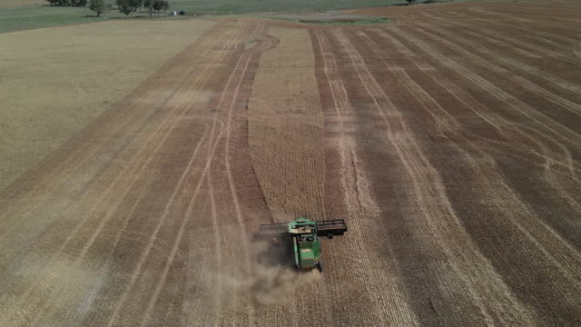 combine harvesters harvesting oats and barley in australia farmers operate combine harvesters as they harvest oats and barley crops at farms near... - bare tree stock videos & royalty-free footage