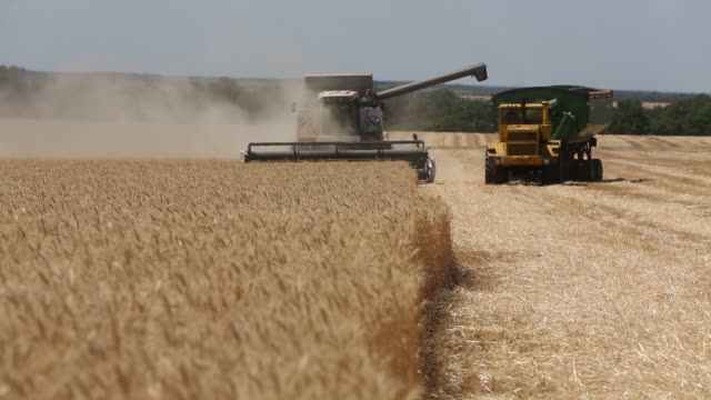 combine harvesters manufactured by rostselmash ojsc during the summer wheat harvest on a farm operated by svetly group of companies in kamenka... - agricultural cooperative stock videos and b-roll footage