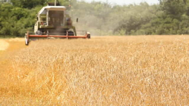 stockvideo's en b-roll-footage met combine harvesting a field of wheat - tractor
