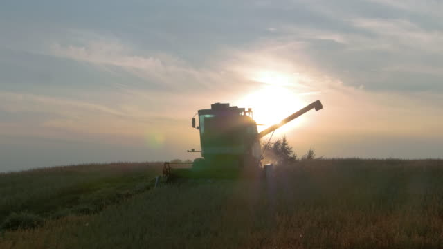 combine harvesting at sunset - poland stock videos & royalty-free footage