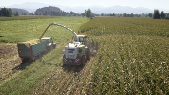aerial combina la raccolta delle colture di mais in campo soleggiato - sunny video stock e b–roll