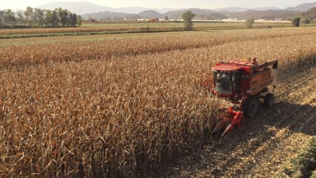 aerial combine harvesting corn crops - combine harvester stock videos & royalty-free footage