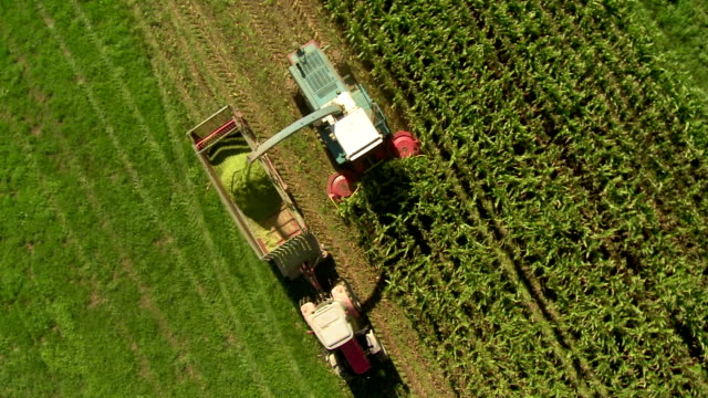 stockvideo's en b-roll-footage met hd: combine harvesting corn for silage - tractor