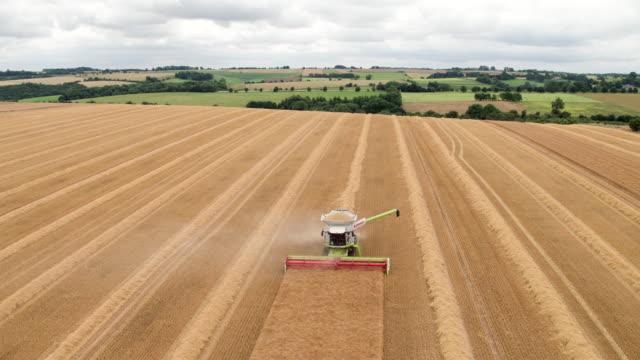 combine harvesting crop - コンバイン点の映像素材/bロール