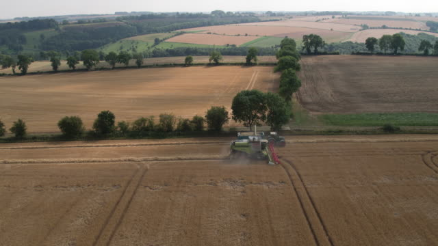 combine harvesting crop - machinery stock videos & royalty-free footage