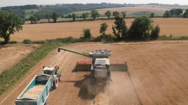 vídeos y material grabado en eventos de stock de combine harvesting crop - maíz alimento