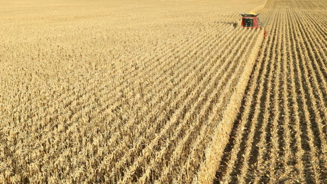 Combine Harvesting Fall Cornfield Aerial