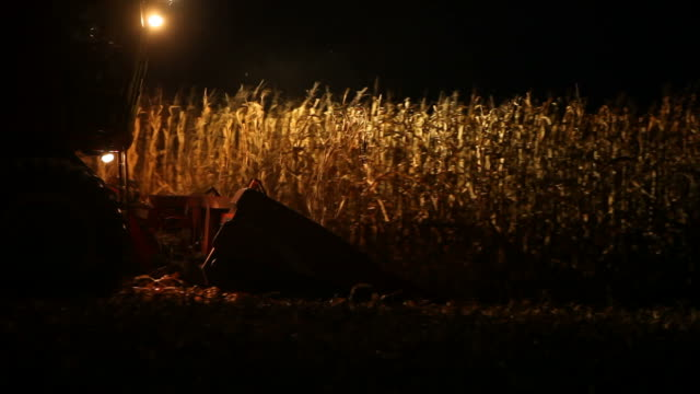combine harvesting fall cornfield at night - machinery stock videos & royalty-free footage
