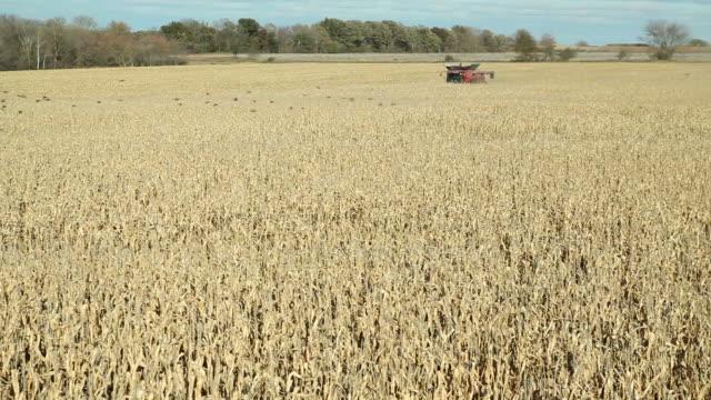 combine harvesting fall cornfield - grain cart stock videos & royalty-free footage
