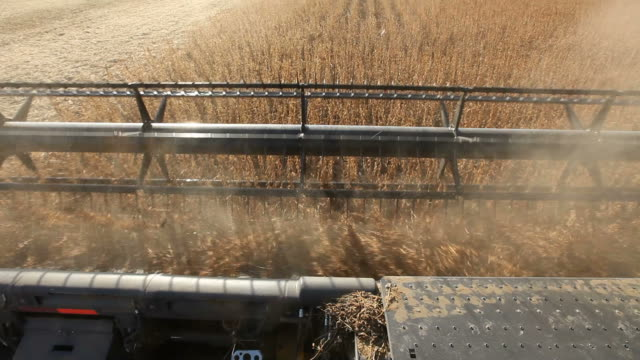 combine harvesting fall soybean field - soya bean stock videos & royalty-free footage