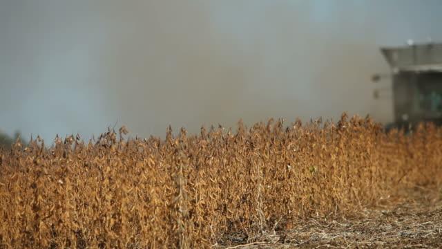 vídeos de stock, filmes e b-roll de combinar a colheita de outono campo de soja - colher atividade agrícola