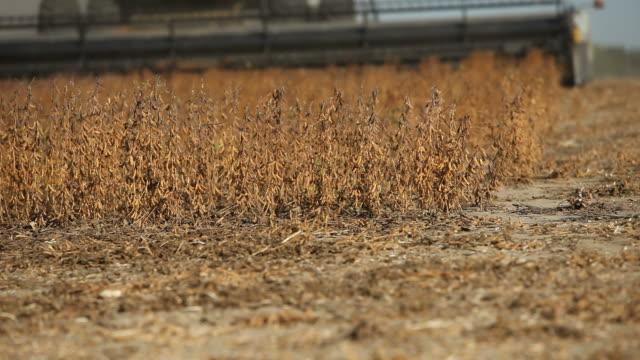 vídeos de stock, filmes e b-roll de combinar a colheita de outono campo de soja - soja