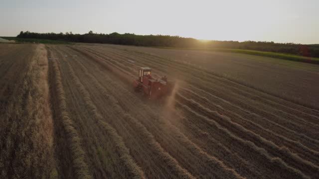 Combiner récolter dans un champ de blé doré