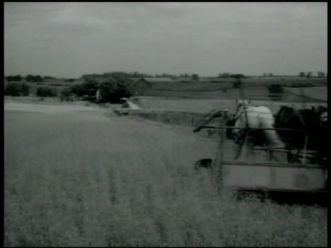 vidéos et rushes de agriculture harvesting combine harvesting in wheat field corn field w/ stacks of harvested corn - 1936