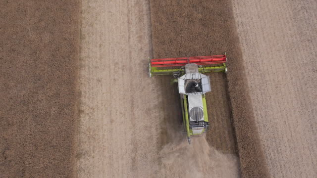 combine harvesting rapeseed, aerial view - cheltenham stock videos & royalty-free footage